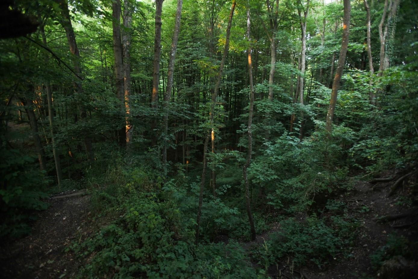 Wald im Bakonygebirge